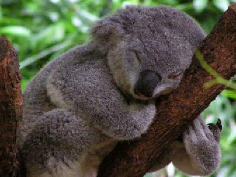Angry Wet Koala Related Keywords Suggestions Angry Wet Koala Long Tail Keywords