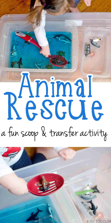 Animal Rescue Transfer Activity