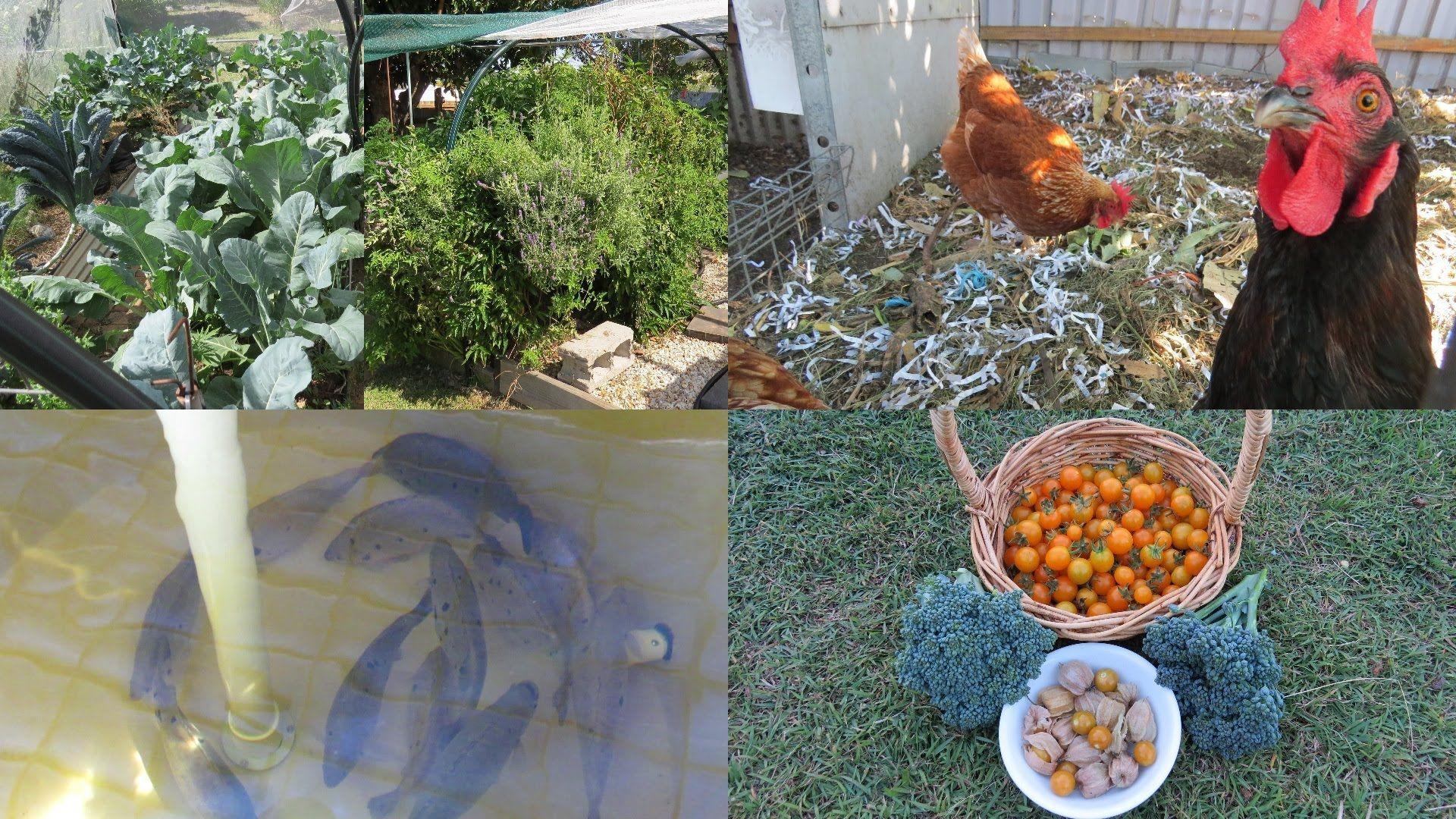 backyard farm tour aquaponics chickens veggie patch u0026 worms