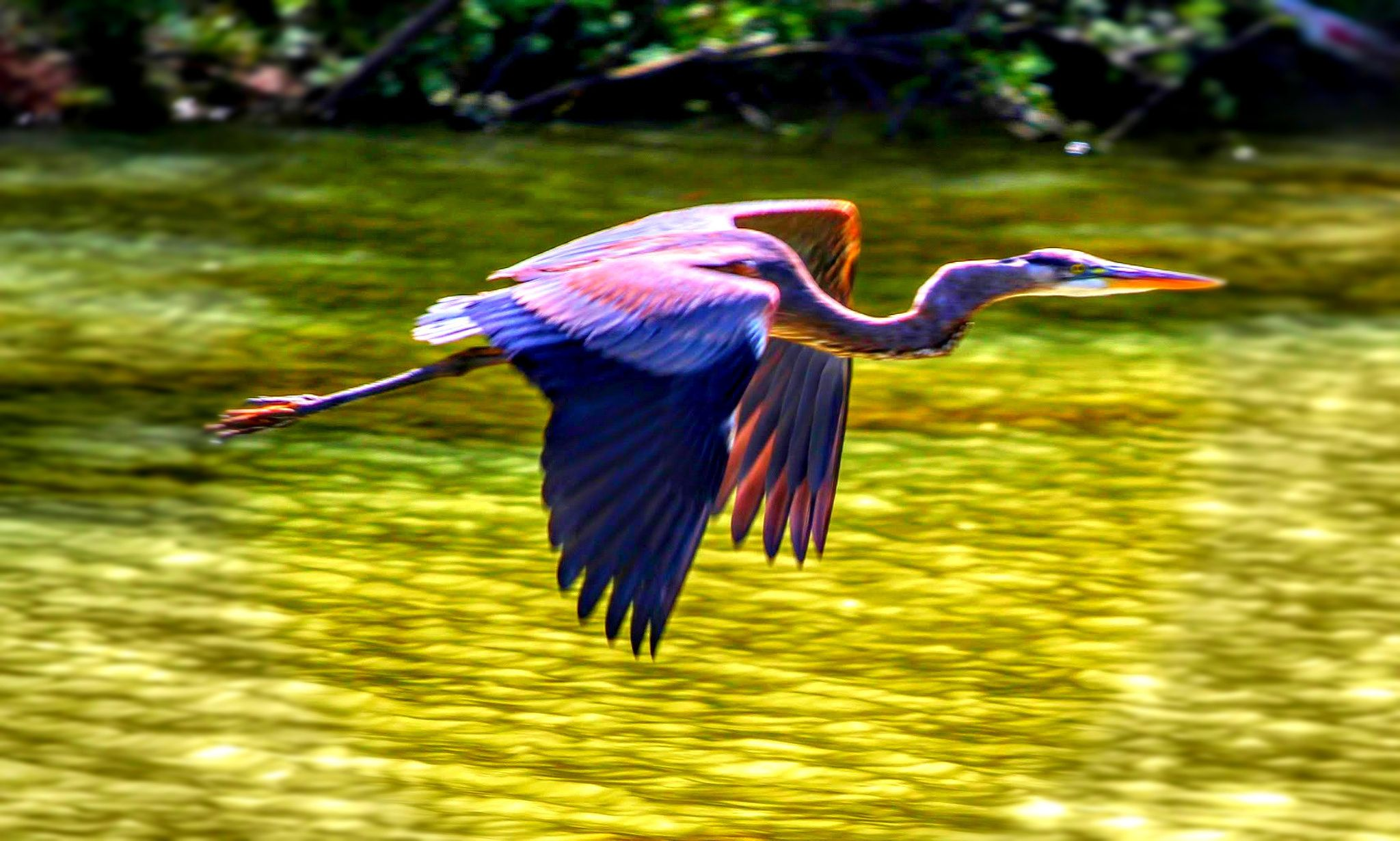 Blue Heron on Lake Oconne - Blue Heron on Lake Oconne, GA by Temba