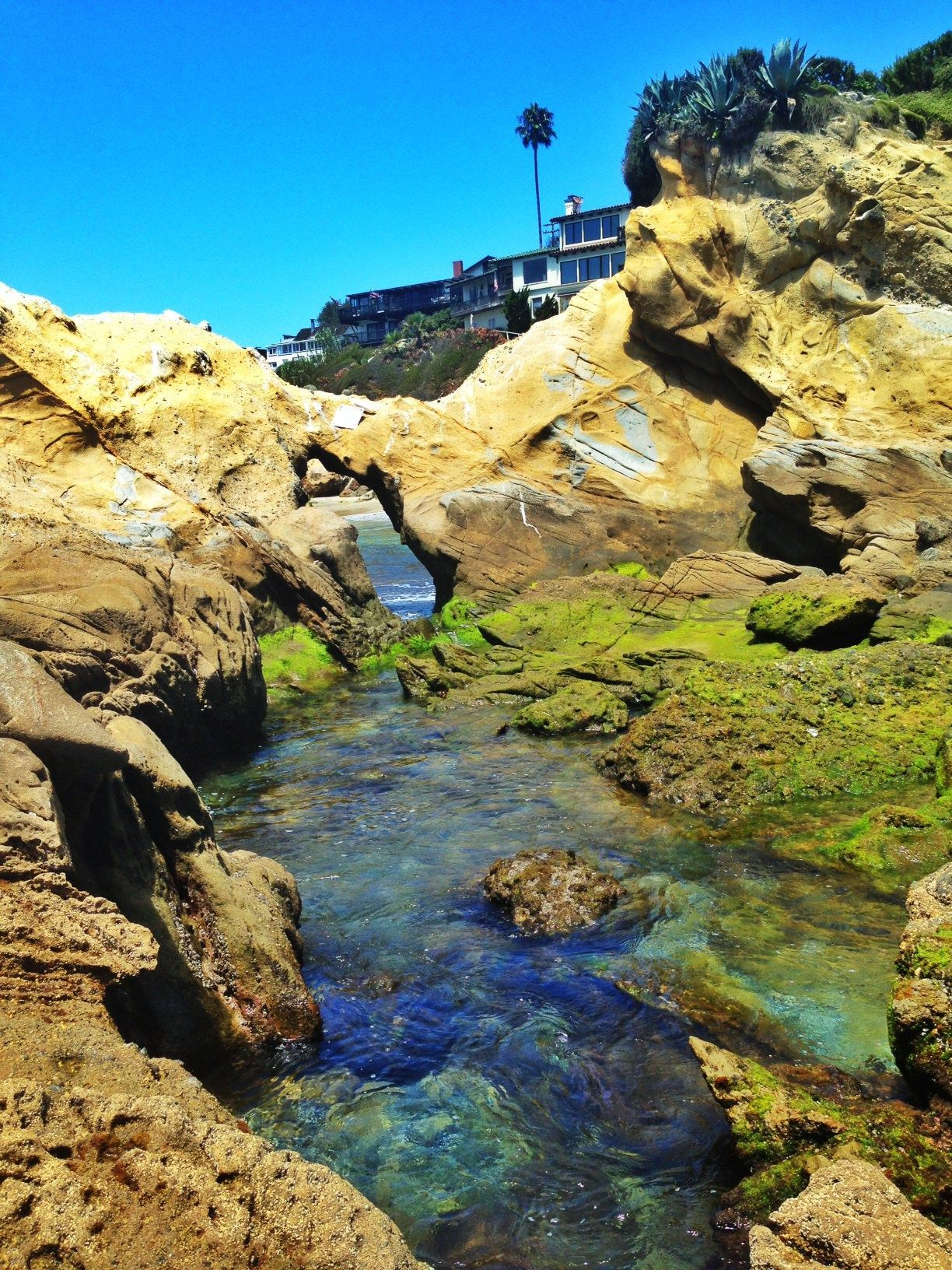 The Kids Love To Go Swimming In Laguna Beach Tide Pools Located At Woods Cove