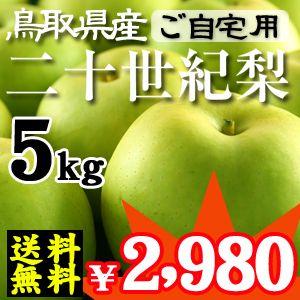 鳥取産 二十世紀梨