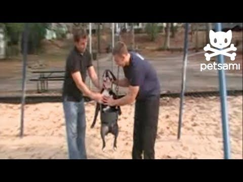 Adorable dog loves to swing