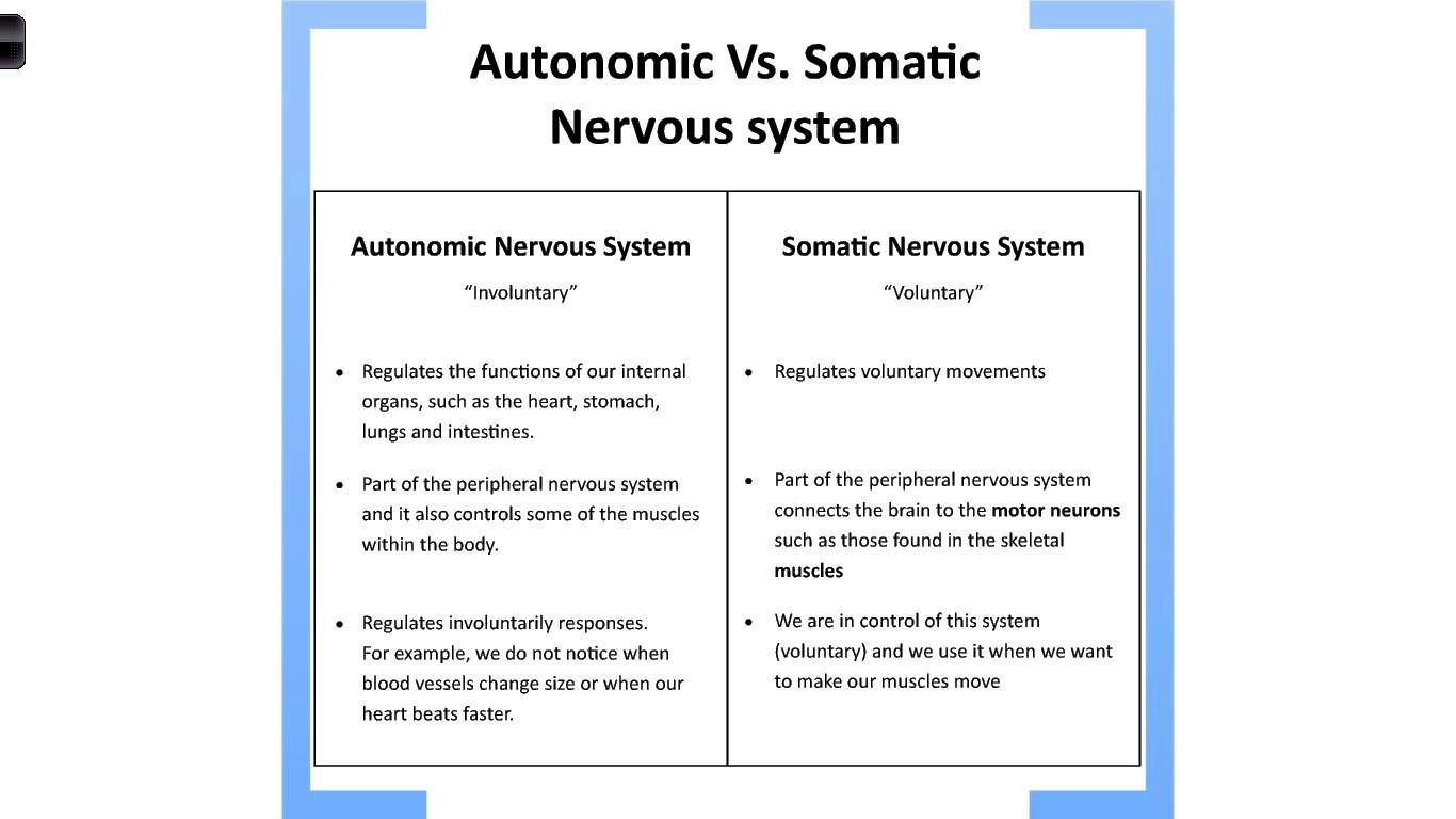 Autonomic Vs Somatic Nervous System