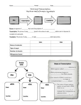 RNA and Transcription Worksheet or Guided Notes