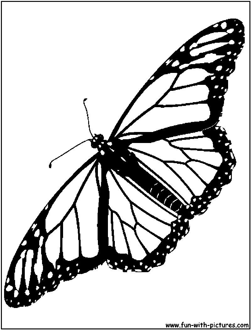 Butterfly Coloring Page In Monarch Butterfly Coloring Page