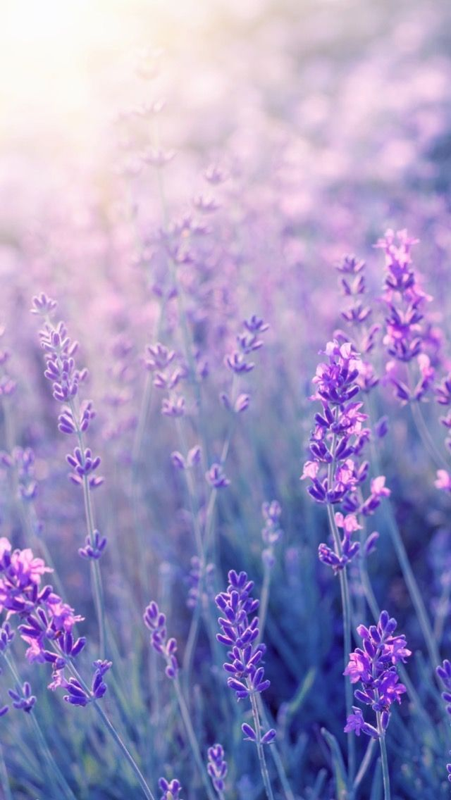 10july2019wednesday You Re Not The Only One In 2020 Purple Flowers Wallpaper Flowers Photography Spring Wallpaper