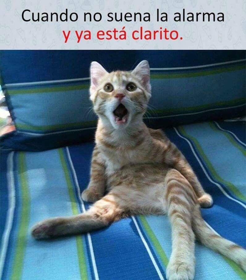 Pin De David Zulca En Memes Gato Asustado Chiste De Novios Frases Divertidas Sobre Animales