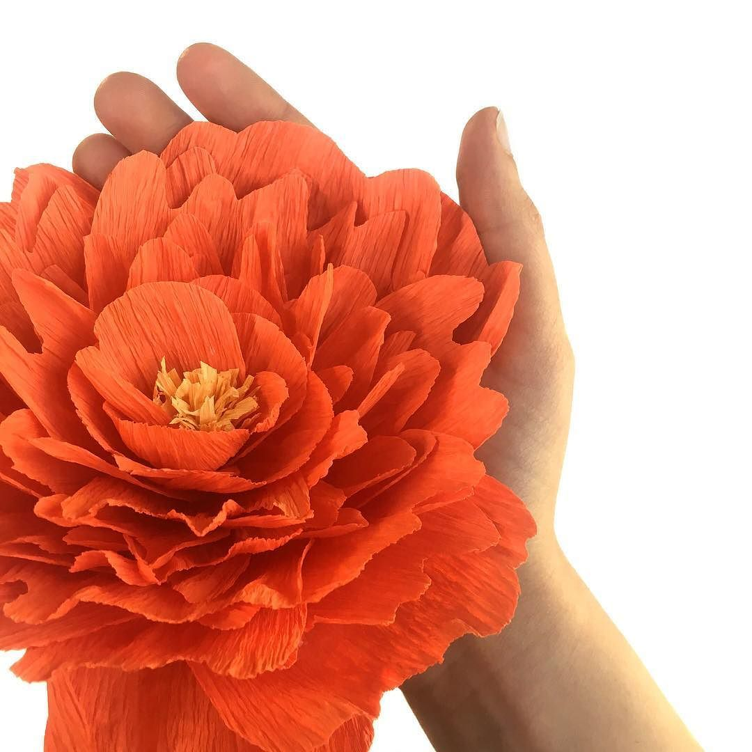 Jumbo Paper Peony Test Taking A Poll Are Paper Flowers On Your To