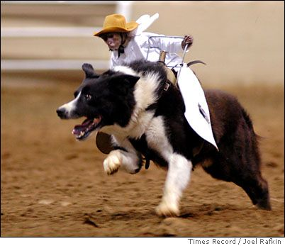 Next Step For This Monkey Is A Bull Ride Yee Haw Animals