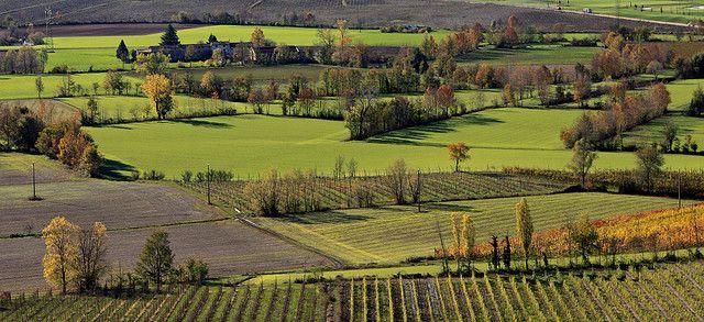 campi e alberi sotto la torre di san martino