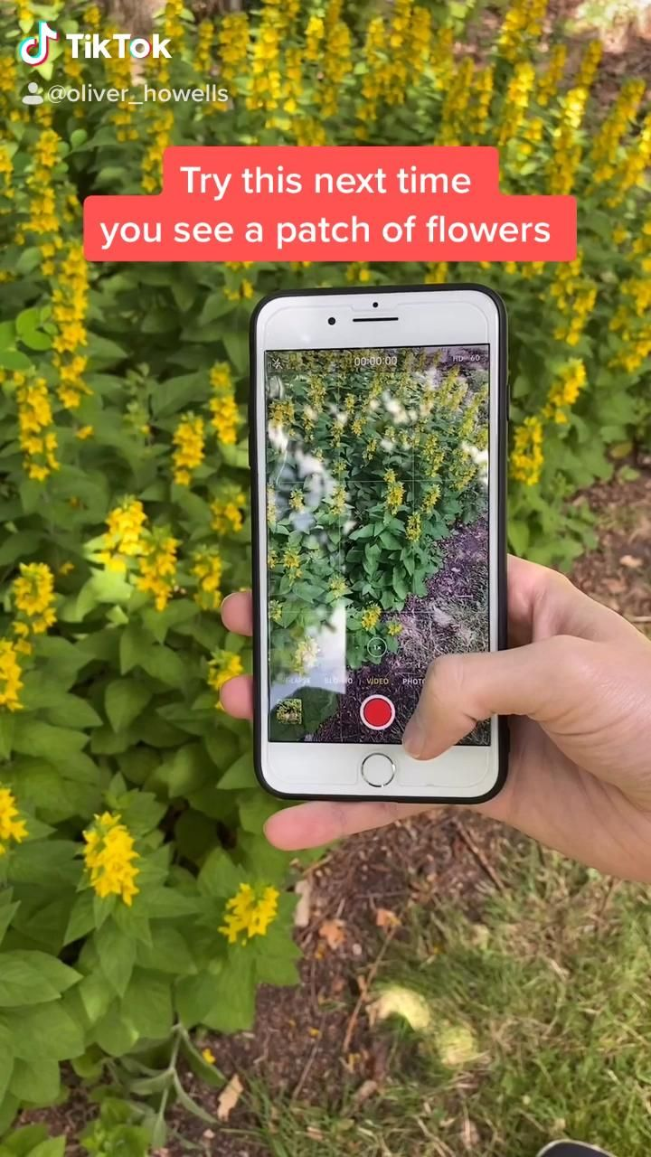 Iphone Videography Trick In Slow Motion Video Creative Photography Photography Tips Iphone Photography Tips