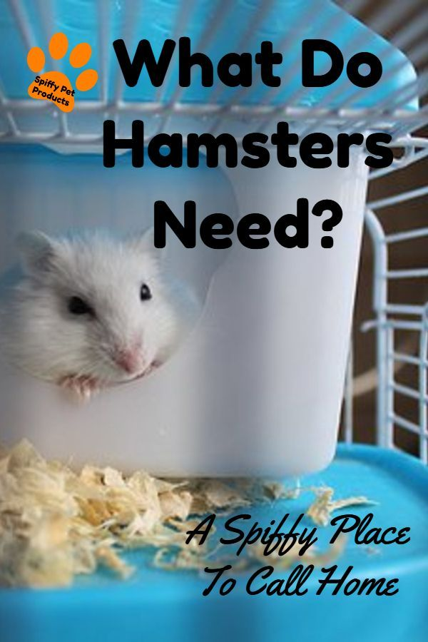 What Do Hamsters Need? Here's How To Make Your Own Hamster