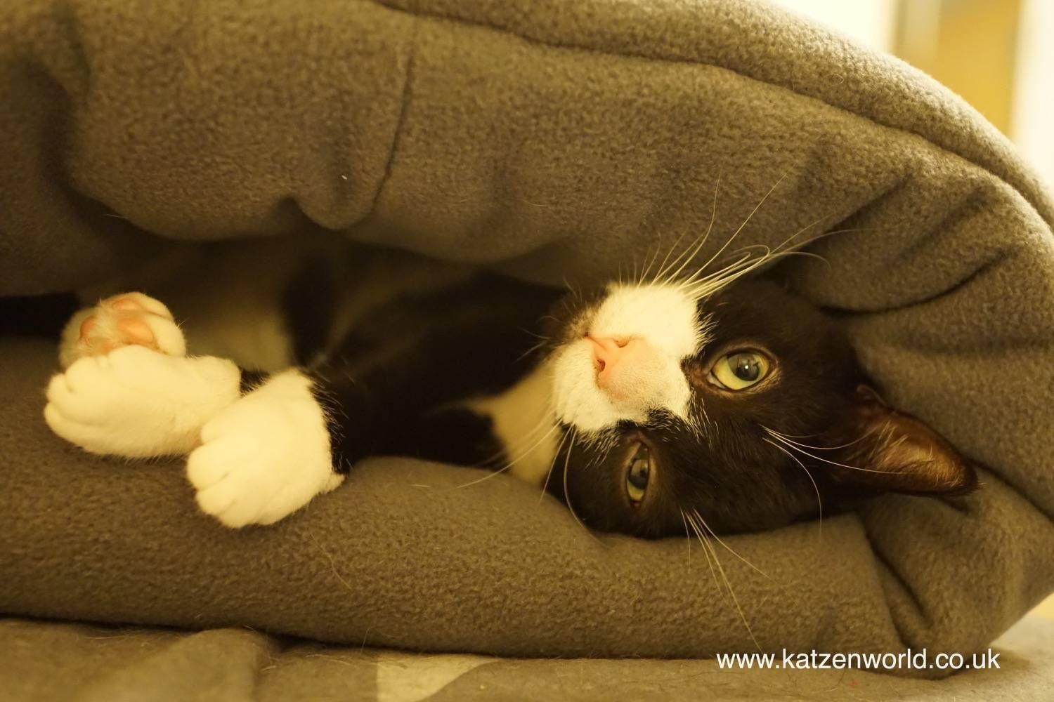 Oliver Who Is The Cutest And Cuddliest Cat In The World With Images Cats Pet News Cat Leash