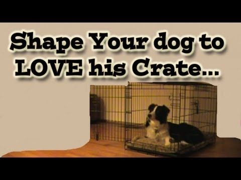 Shaping Your Dog To Love His Crate Clicker Training Tutorial