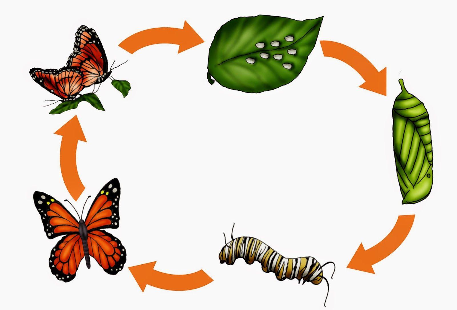 krabbelwiese: Monarchfalter   Insect / Насекомые   Pinterest ...