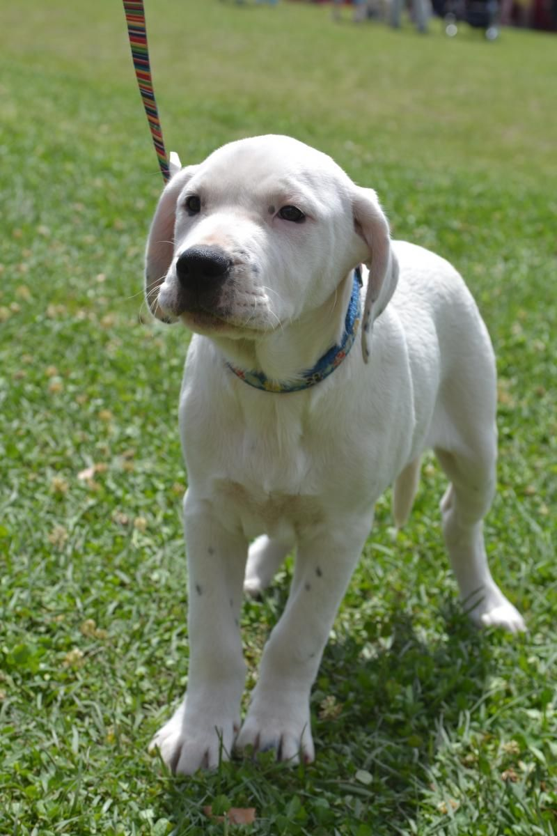 Adopt Ethan On Mixed Breed Puppies Puppies Dogs