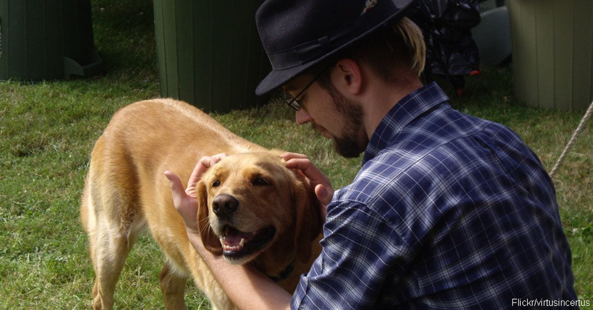 10 Things to Do When Meeting a New Dog! Dogs, Dog