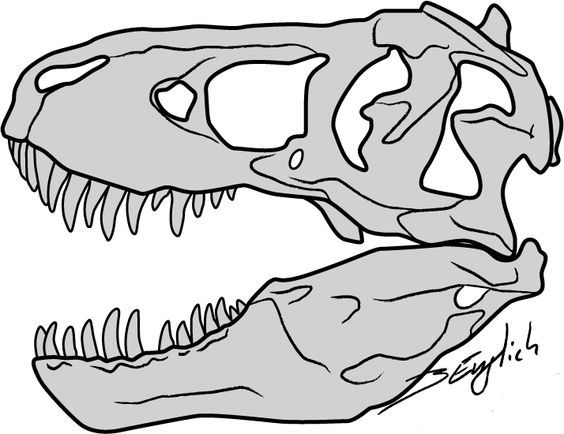 printable dinosaur skeleton template - t rex bones drawing google search 3rd birthday