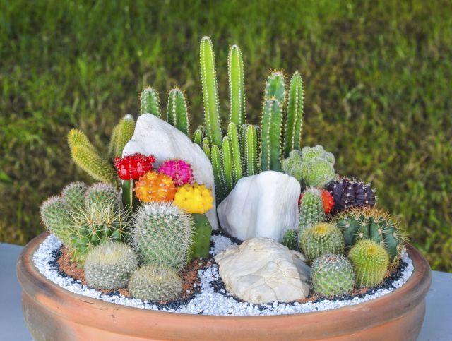 composicion de jardin pequeo con piedras buscar con google