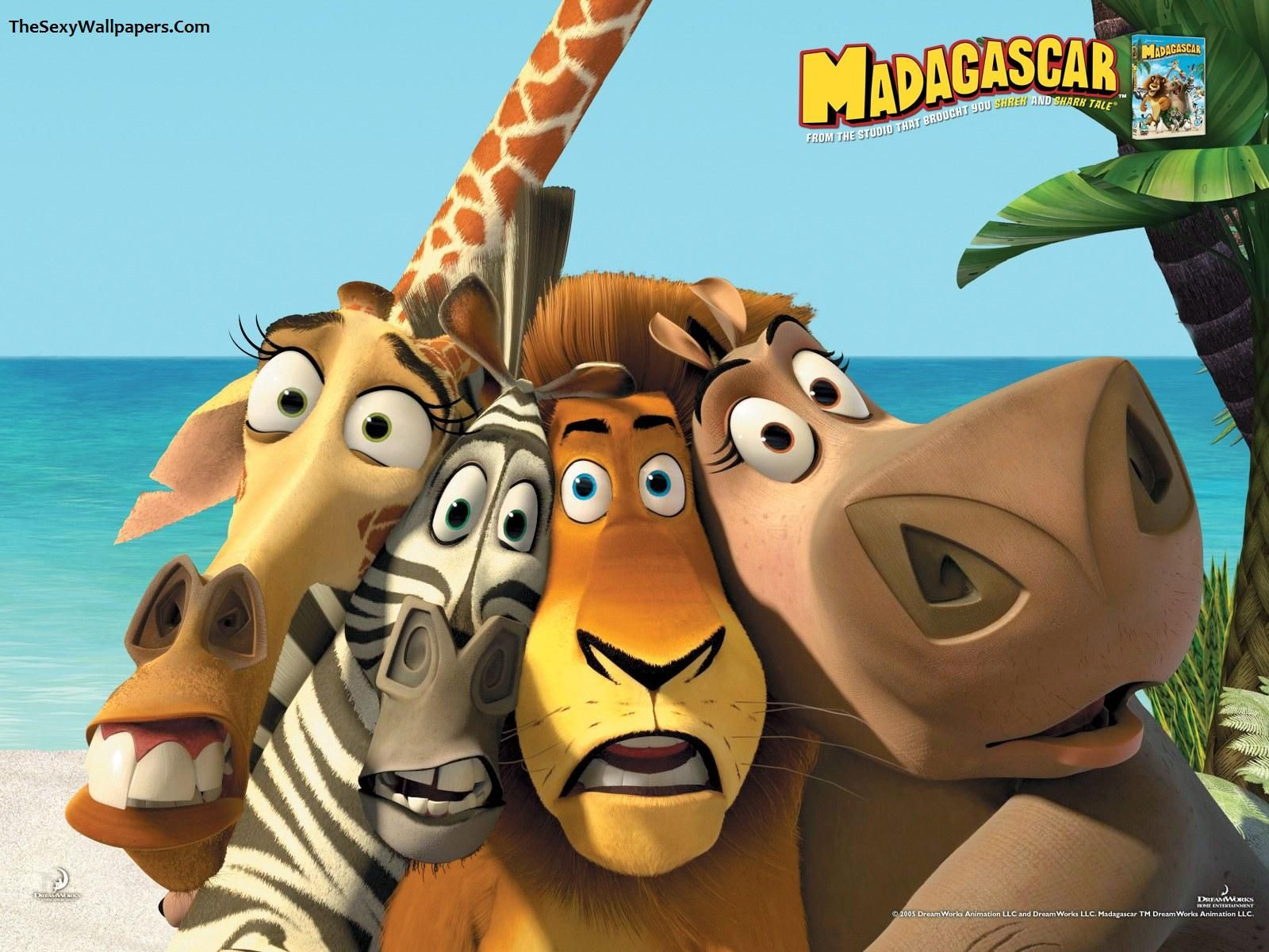 movies madagascar movie wallpapers hd desktop and mobile | hd