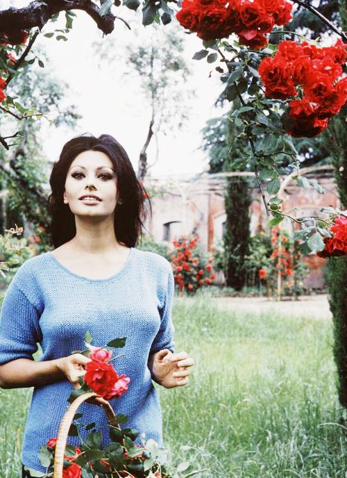 Sophia Loren picks flowers at her Italian villa she shared with producer Carlo Ponti in 1964. Photo by Alfred Eisenstaedt.