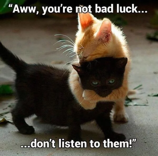 Black Cat, Cats, Kittens, Funny Friday The 13th image