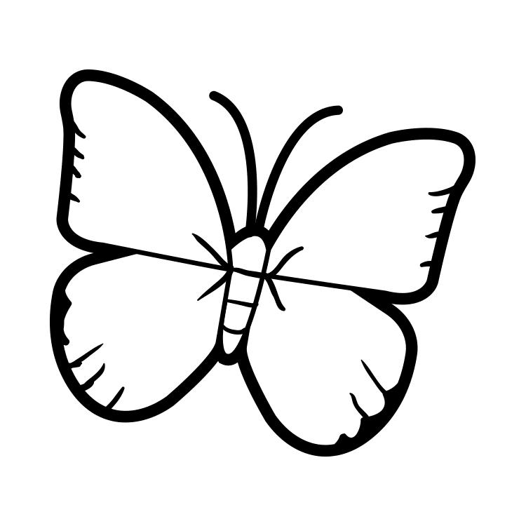 mewarnai gambar kupu kupu cantik menggambar kupu