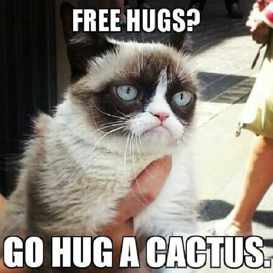 Cat meme of Grumpy Cat about free hugs and a cactus.
