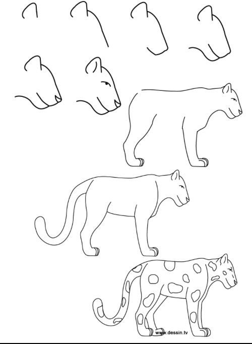 How to draw a leopard   Easy animal drawings, Easy animals ...