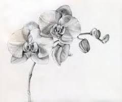 Bildergebnis Fur Tattoo Orchidee Tattoo Orchidee Schulter Orchideen Tattoo Orchidee