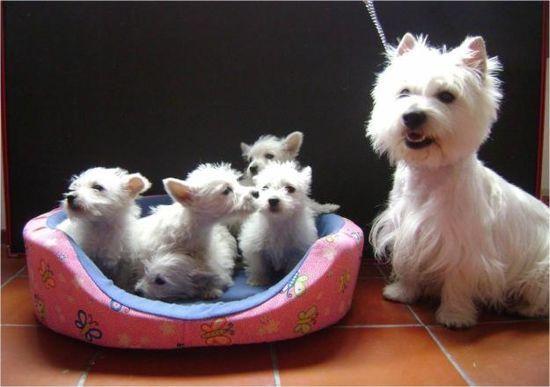 Mila Pawshake Hunde Hunde Welpen