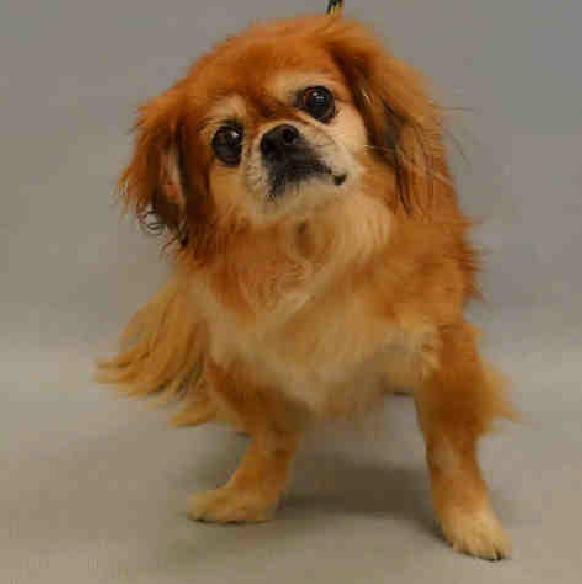 Adopt Bubby ADOPTION PENDING on Dog adoption, Old dogs