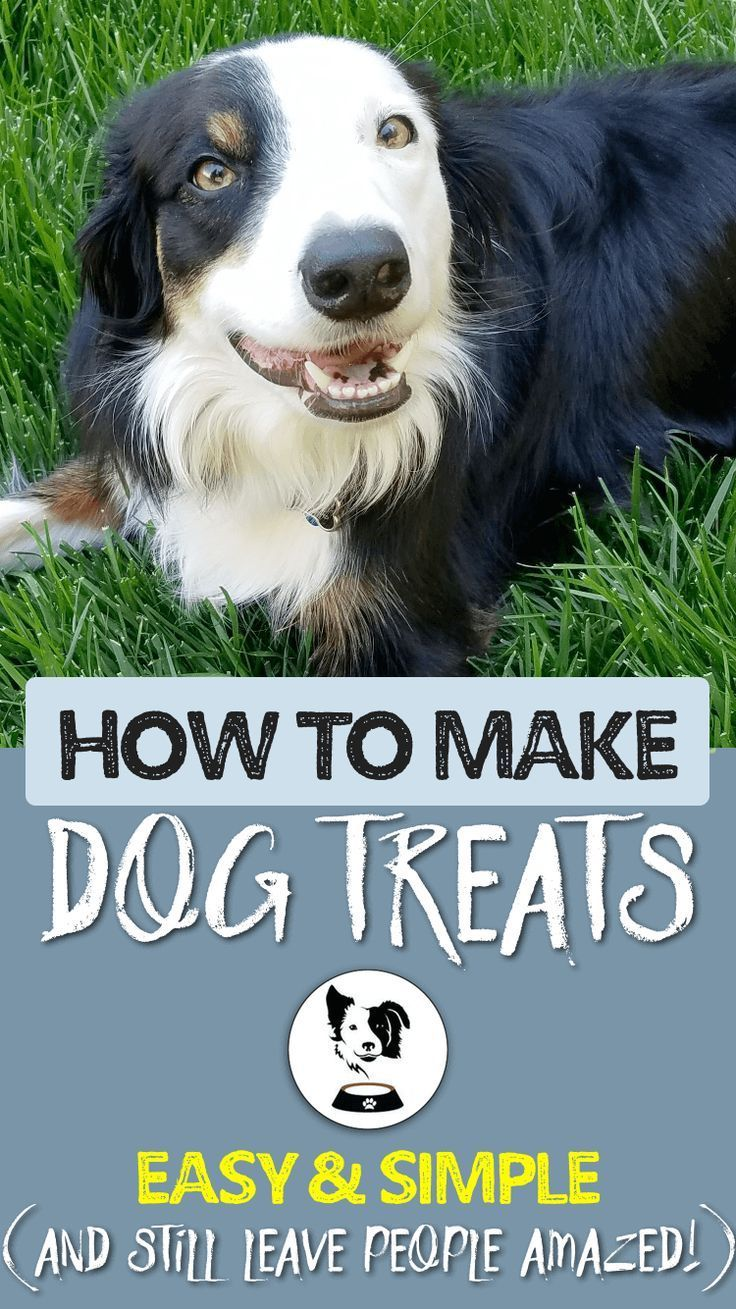 How to make dog treats minimum effort and still leave