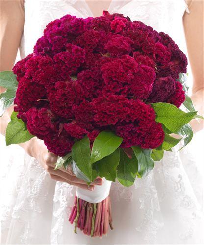Grow Your Own Wedding Flowers: Cincinnati Wedding