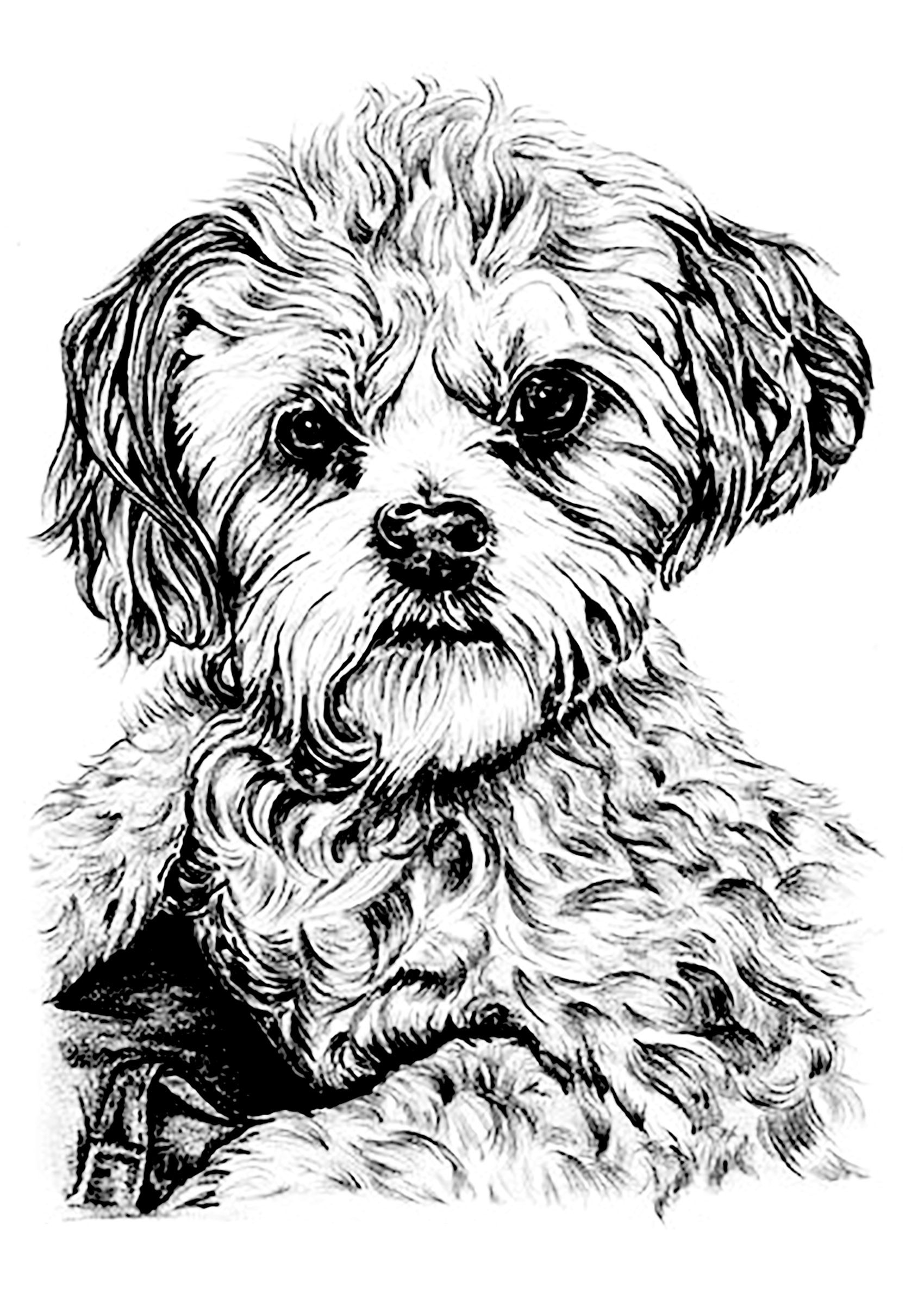 Here Are Complex Coloring Pages For Adults Of Animals Different Levels Of Details And Styles Are Available From The Dog Coloring Page Dog Drawing Dog Sketch