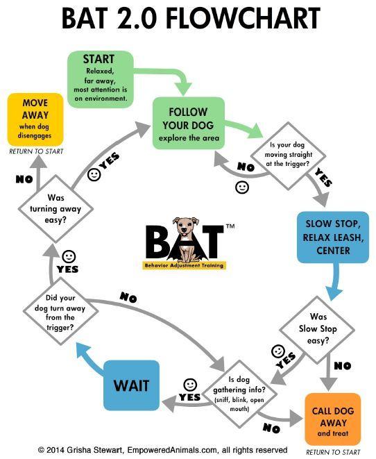 Bat Flow Chart Jpg 542 661 Aggressive Dog Dog Behavior Dog
