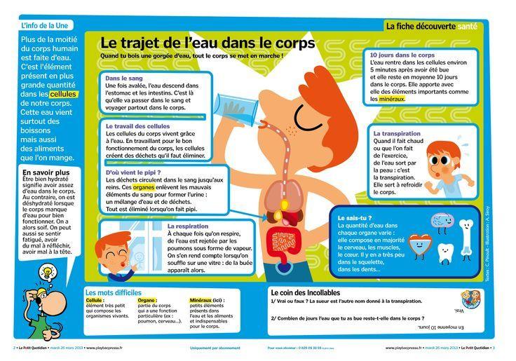Le Trajet De Leau Dans Le Corps Humain French 2 Teaching French