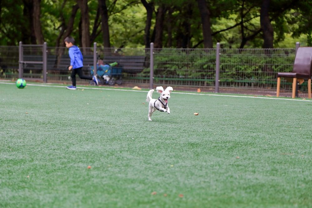 3 Clear Signs You Need to Switch to Pet Artificial Grass