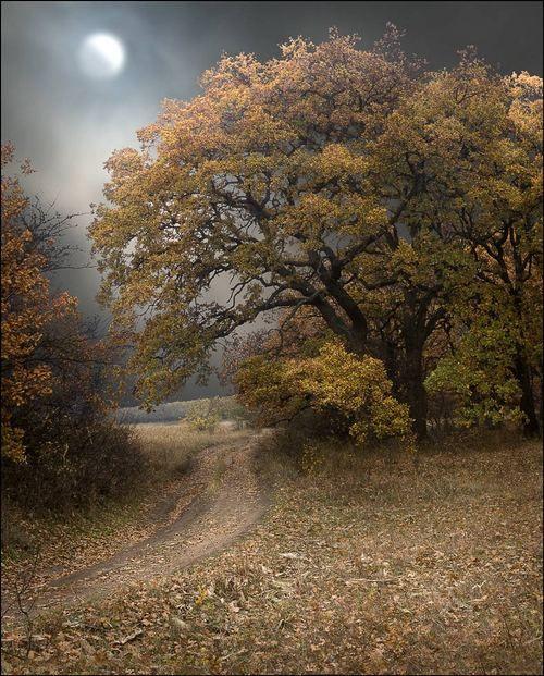 Full moon in Autumn #fall #seasons #foliage