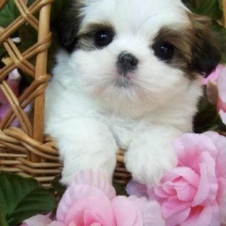Pin By Alice Mcavoy On Animals Cute Baby Animals Baby Dogs Baby Animals