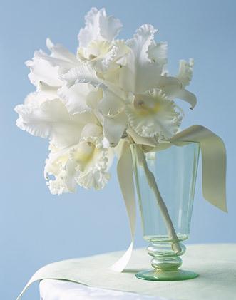White Cattleya Orchid Ramos De Novia Flores Boda Colores Para Boda