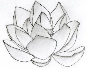 Flower drawings with color for kids tumblr in black and white lotus flower drawings with color for kids tumbler in black and white tattoos images photos lotus flower drawings biography sourcego mightylinksfo
