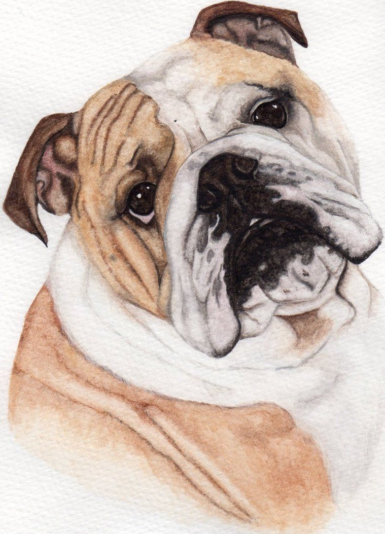 Here is an updated version of my bulldog watercolour.