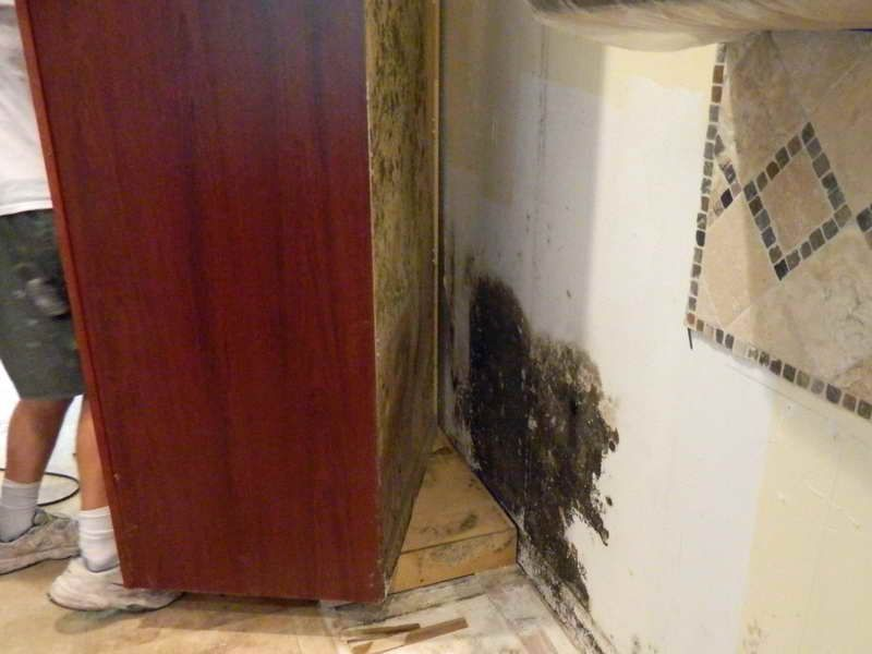 How To Remove Black Mold The Effective Way Black Mold Hidden