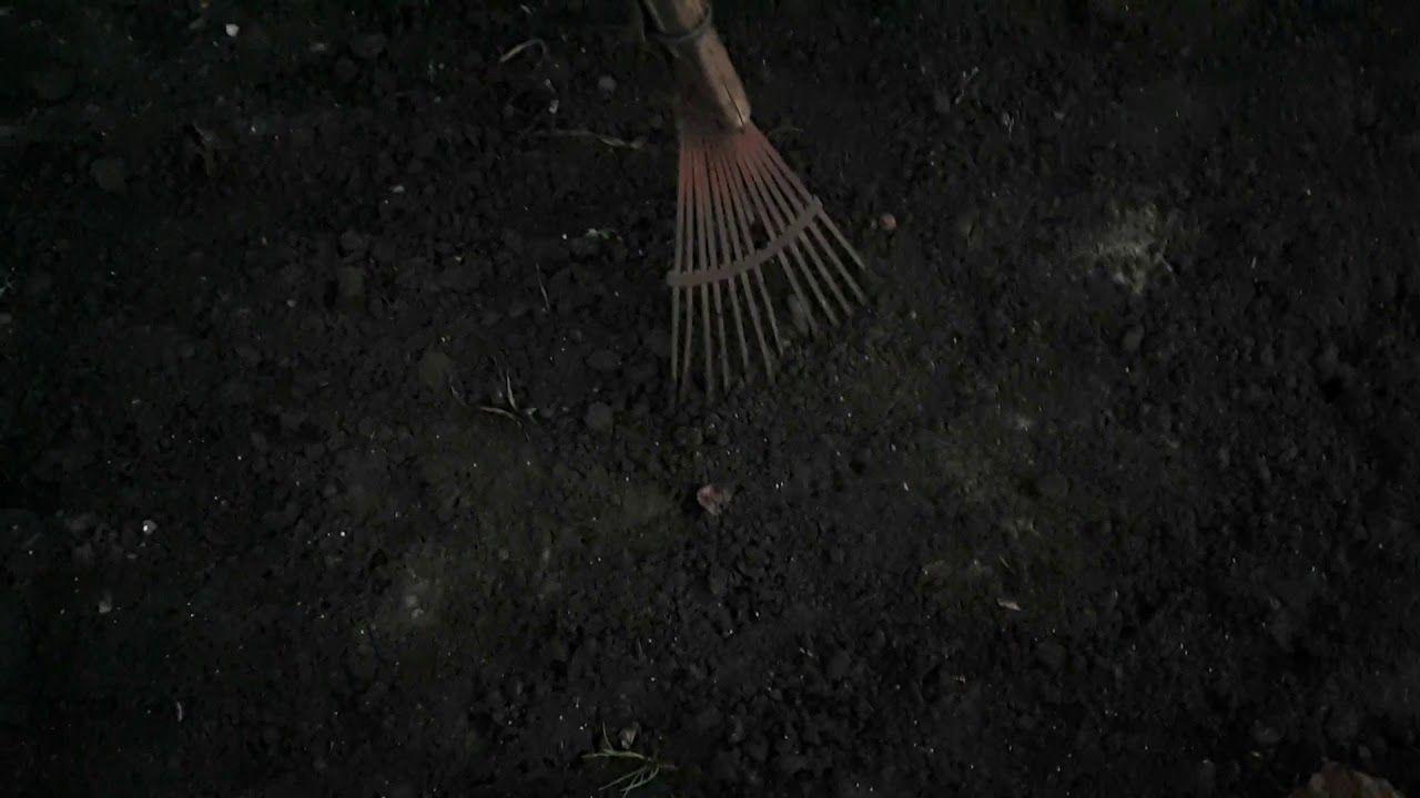 А как посеять сидераты,где и зачем? (с изображениями)
