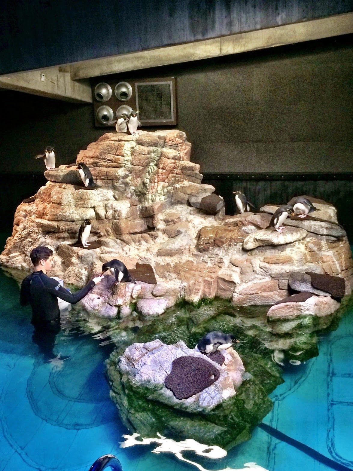 12/27/14 New England Aquarium Birthday Fun New england