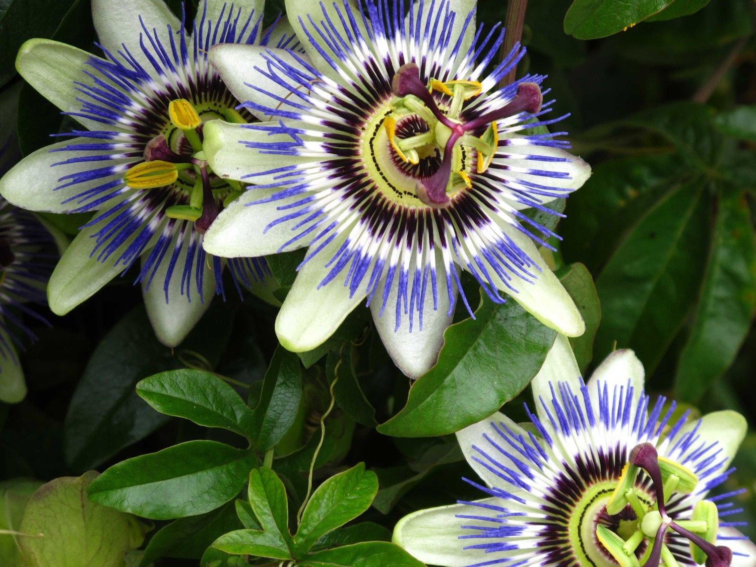 Blue Passion The Tropical Flowers Guestbookbox Pinterest