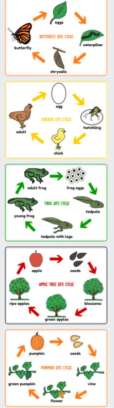 Life Cycle Posters Frog Chicken Butterfly Apple Tree Pumpkin Life Cycles Montessori Science Kindergarten Science