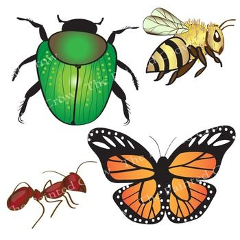 insect clip art bug clipart 24 piece set color and blackline rh pinterest co uk clipart insects clipart insects free download